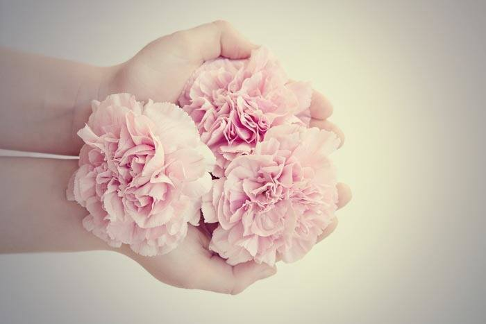 carnations-in-hand