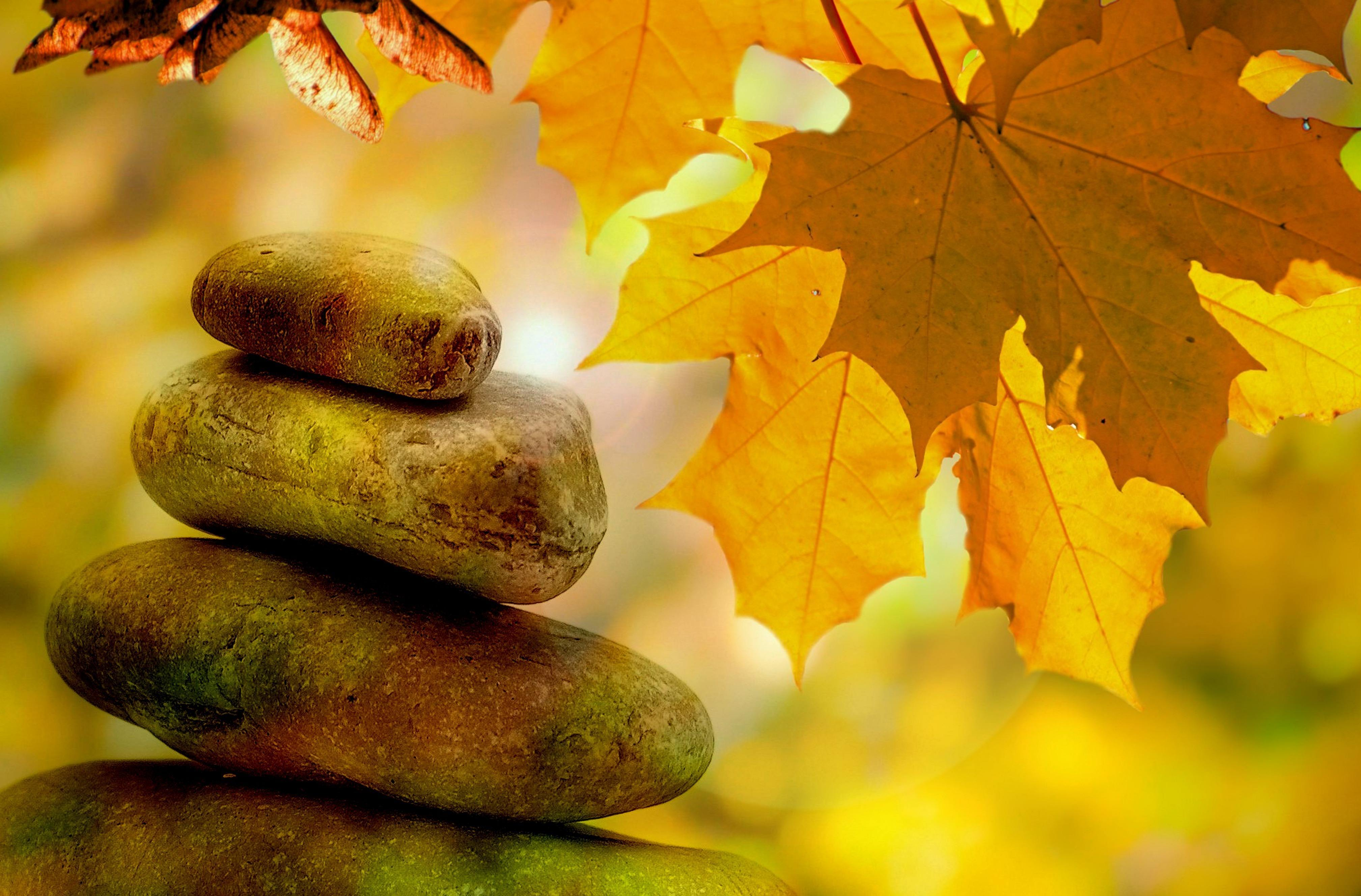Autmn leaves and rocks